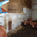 Bau von Tierboxen