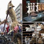 Festival di Yulin, Cina