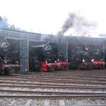 Ein Teil der Lokomotiven im Gerolsteiner Lokschuppen