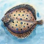 Plattfisch II - Aquarell
