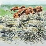Longhorns in long Gras - Aquarell