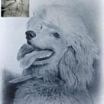Портрет собаки, сухая кисть