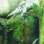 Grenouille de la forêt humide froide (Melbourne Museum - galere de la forêt)