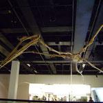 Squellette au Musée d'histoire naturelle