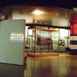 L'une des piece mythique de la galerie de Melbourne, un cheval de course!
