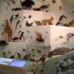 Une toute petite partie de la collection de spécimens d'animaux