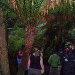 Fougères dans la forêt tropicale froide