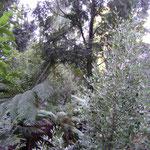Echantillon de forêt humide froide au Melbourne museum