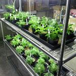 植物生育棚、いれました