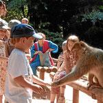 Affenpark nahe Hochkönigsburg, Elsass