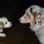 Albus freut sich - endlich auch mal ein weißer Hund.
