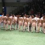 Swiss'Expo 2011
