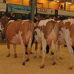 Gruyère Expo 2010 - Kategorie 1