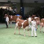 Swiss'Expo 2011 - Schuwey Classic Roxy 2. Rang