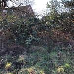 ...ein Durchkommen durch die Brombeerbüsche war aber praktisch unmöglich...