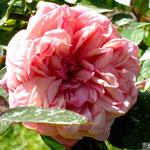 Mme La Princesse de Radziwill-Primavera