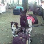Bella und Ayra an unserem Lager