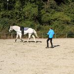 Cavallo beim Ablongieren