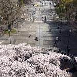 教会の桜と開港広場
