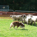 youpii des moutons