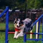 Jessie = agility