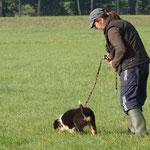 initiation au pistage français (Jessie 10 semaines)