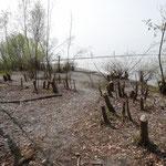 Das Uferweidengehölz wurde über das Jahr fast abgeräumt. (Foto: Weinreich)