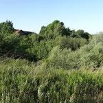 Der verschwundene Burgberg von Flockenbach - heute eine aufgelassen Kiesgrube (Weinreich 2014)