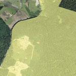LSG - Langenargen Tettnanger Wald N Krippelebogen
