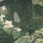 Flächenhaftes Naturdenkmal - Tettnanger Wald - Krippelebogen (Toteisloch)