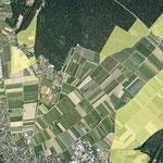 LSG - Langenargen Tuniswald
