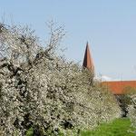Streuobstwiese in Oberdorf im April 2011(Foto: NABU Langenargen)