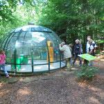 Infos über die NAJU Gött: Besuch im Erlebniswald  Schönhagen im August 2016