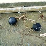 岩子漁港:近くのスポーツセンターから流れ出たボーリングの玉