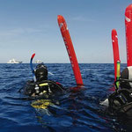 Galapagos Shark Diving - Tipps für Deinen Tauchtrip Galapagos Inseln