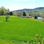 Fantastischer Blick aus dem Wohn-/Essbereich Richtung Süden, auch zum Flusslauf der Reuss
