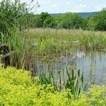 Malerisch: Teich mit Brunnen-Anlage