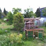 こんどは息子のキキまで薪小屋の上にのぼっています