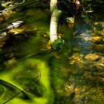 Ein Herz für einen Touristen spielt das Wasser in den Bach.