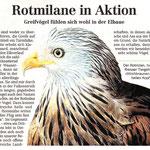 Torgauer Zeitung November 2011