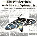Torgauer Zeitung August 2011