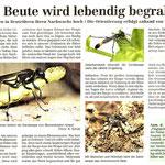 Torgauer Zeitung September 2011