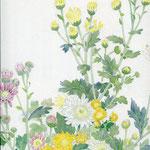 花かごの小菊