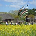 丘の下には昭和の古民家が移築され、当時の生活風景が展示されていました。畳にランドセルを置くとすぐにナイフをポケットに入れ野や山にと走り回っていました。