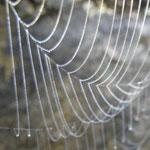 Radnetz der Höhlenspinne (Meta menardi)
