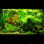 Aquarium Thomas 80cm mit T5 2x28 Watt, Juwel Day