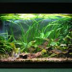 Aquarium Thomas mit Rautenflecksalmlern 80cm
