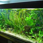 Aquarium Thomas 120cm mit T5 4x54W Day