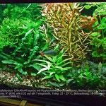 Aquarium Jörg