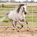 Foto: NESSA Equestrian Design